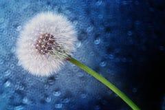 Dandelion seeds macro on blue background Stock Photo