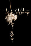 Dandelion seeds with small, wooden laundry nippers and thin metallic wire Royalty Free Stock Images