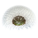 Dandelion seeds viewed under, detached. 3d Render stock illustration
