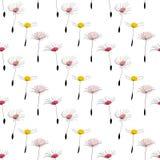 Dandelion seeds on white background Stock Photos