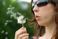 Dandelion seeds in the wind Royalty Free Stock Photography