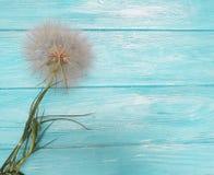 Dandelion sezonu karty sceny delikatnej antykwarskiej wakacyjnej łamliwości lata stara miękkość na drewnianym tle błachym Obraz Royalty Free