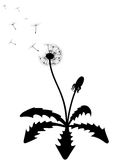 Dandelion silhouette. Vector illustration of a dandelion Royalty Free Stock Photography