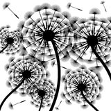 Dandelion silhouette-background Royalty Free Stock Images