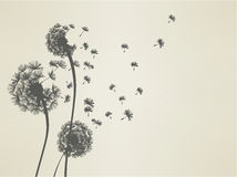 Dandelion. Sillouette - Vector File EPS10 Stock Photography