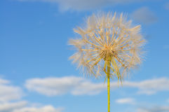Dandelion in the sky Royalty Free Stock Images