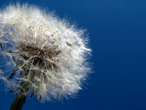 Dandelion in sky Royalty Free Stock Images