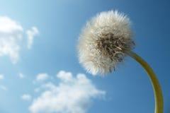Dandelion in the sky Stock Photo