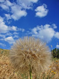 Dandelion and sky with clouds Royalty Free Stock Image