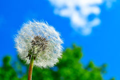 Dandelion and sky Royalty Free Stock Images