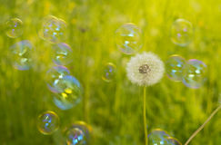 Dandelion and soap bubbles Stock Photos