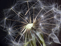 Dandelion in space Royalty Free Stock Image