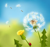 Dandelion spring Royalty Free Stock Photos