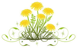 Dandelion, spring Royalty Free Stock Photography