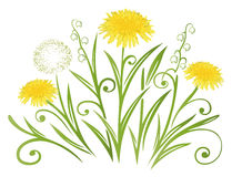 Dandelion, spring Royalty Free Stock Photos