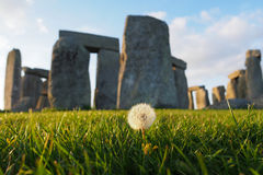 Dandelion at Stonehenge. A lone dandelion, with Stonehenge in the background Royalty Free Stock Image