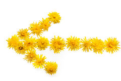 Dandelion strzała Obrazy Stock