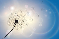 Dandelion in a summer breeze. Silhouette of a dandelion with seeds blowing in a summer breeze. Blue sky bokeh background with sunlight and light flares. EPS10 Stock Images