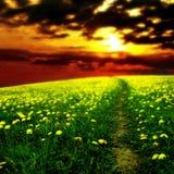 Dandelion sunrise stock image