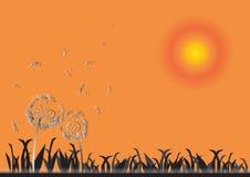 Dandelion on sunset, spring flower background Royalty Free Stock Photography