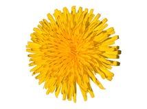 Dandelion Taraxacum Officinale Isolated. Yellow flower isolated. White background royalty free stock photography