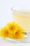 Dandelion tea Stock Photography