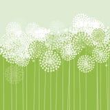 Dandelion texture Stock Image