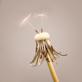 Dandelion with two seeds Stock Photo