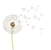 Dandelion vector Stock Photography