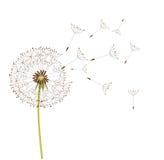 Dandelion vector Stock Photography