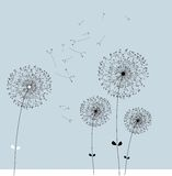 Dandelion vector Royalty Free Stock Images