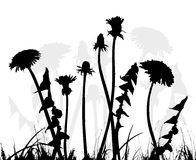 Dandelion - vector Stock Photos