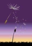 Dandelion, vector illustration Stock Photography