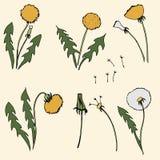 Dandelion vector illustration on beige background stock illustration