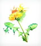 Dandelion, vector illustration Stock Image