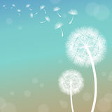 Dandelion. Vector dandelion on a wind loses the integrity Stock Photos