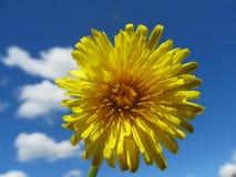 Dandelion w niebie Obrazy Royalty Free