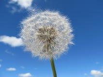 Dandelion w niebie Obrazy Stock