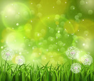 Dandelion w trawie na zielonym tle Zdjęcia Stock