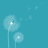 Dandelion w wiatrowym tle Zdjęcia Royalty Free