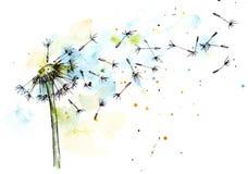 Dandelion in watercolor Royalty Free Stock Image
