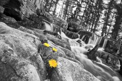 Dandelion and waterfall royalty free stock images