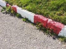 Dandelion Weeds. Pesky Yellow Dandelion Weeds growing in garden royalty free stock photos