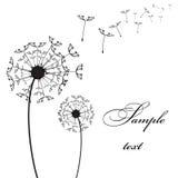 dandelion wektor dwa Ilustracji