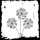 Dandelion on white. Vector card with flower, dandelion on white Royalty Free Stock Photos