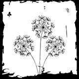 Dandelion on white Royalty Free Stock Photos