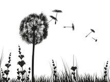 Dandelion on white background. Vector illustration of Dandelion on white background Stock Image