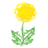 Dandelion on white background. Vector illustration Royalty Free Stock Photography