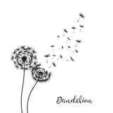Dandelion on the white background. Vector Illustration Stock Images