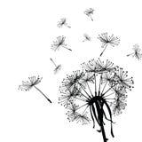 dandelion wiatr Zdjęcie Stock